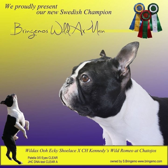 Vår nya CHAMPION!!!!