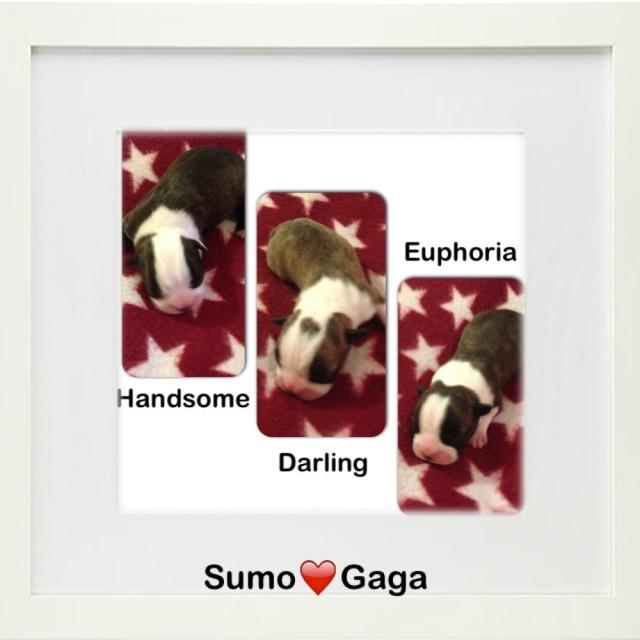 Sumo har blivit pappa!