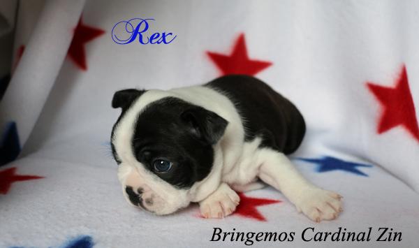 rex4v1aa1