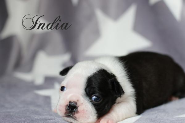india2v1 - Kopia