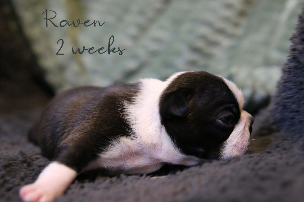 raven22